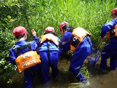 植杉川の生き物調査